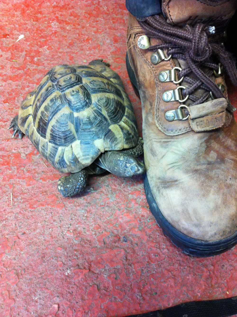 James' foot and a tiny tortoise!